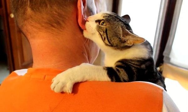 Cat Suckles Man's Ear (Video)