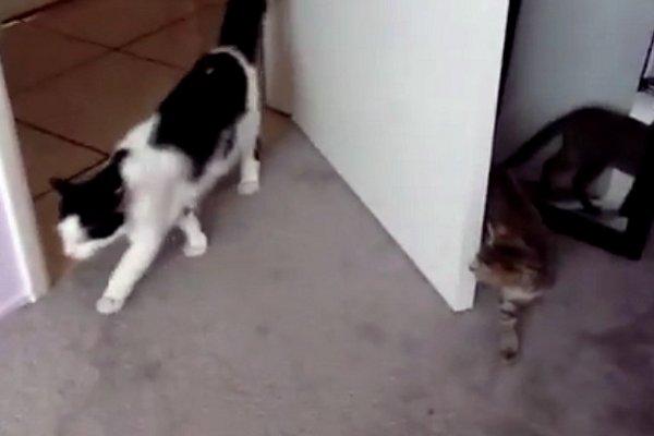 Kitten Surprise Attack Fail