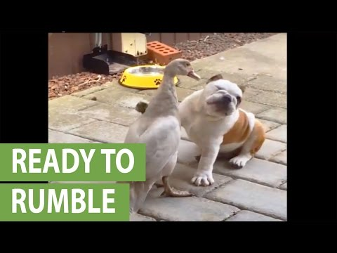 Lets Get Ready To Bumble!