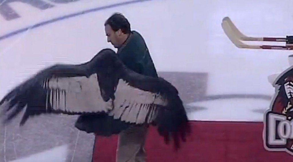 Escaped Hockey Condor Was This Weekend's Sports Highlight