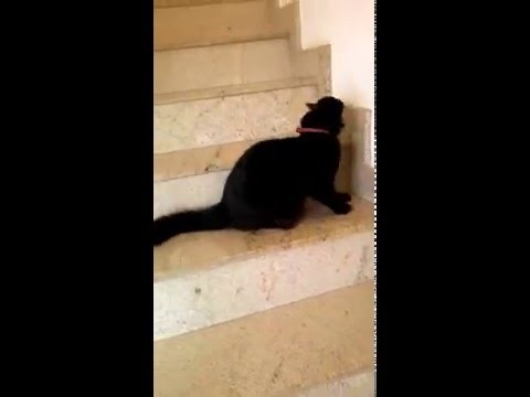 Slinky Cat Goes Down the Stairs in a Really Weird Way