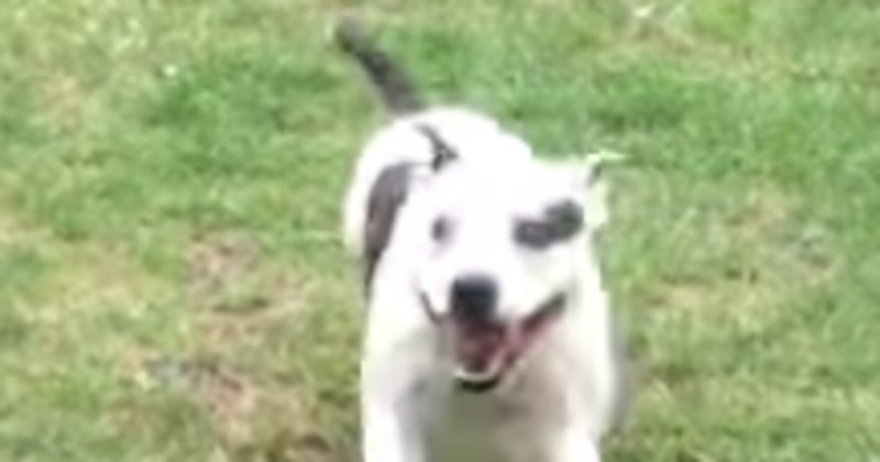 This Dancing Dog Is All Of Us When Our Favorite Song Comes On