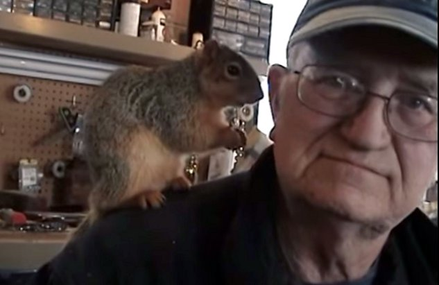 Tame Squirrel Is Tame (Video)